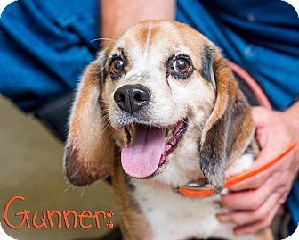 Beagle Mix Dog for adoption in Somerset, Pennsylvania - Gunner