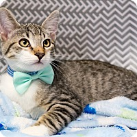 Adopt A Pet :: Owen - Montclair, CA