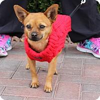 Adopt A Pet :: DAVEY - Las Vegas, NV