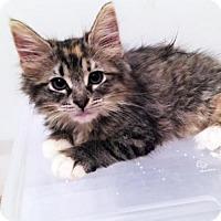 Adopt A Pet :: Omega - Austin, TX