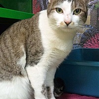 Adopt A Pet :: Gigi - Arlington/Ft Worth, TX