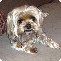 Adopt A Pet :: Tula - West Palm Beach, FL
