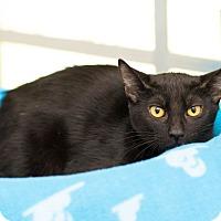 Adopt A Pet :: LuElla - Houston, TX