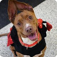 Adopt A Pet :: Evie - Bradenton, FL