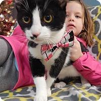 Adopt A Pet :: Cherry - Bucyrus, OH