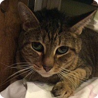 Adopt A Pet :: PoePoe - Breinigsville, PA