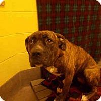 Adopt A Pet :: DIAMOND - Upper Marlboro, MD