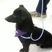 Adopt A Pet :: Bentley - Staunton, VA