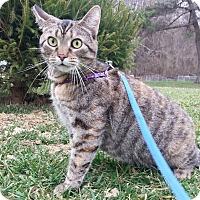 Adopt A Pet :: Reanna - Shinnston, WV