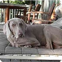 Adopt A Pet :: Casey - Attica, NY