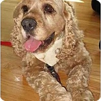 Adopt A Pet :: Rudy - Tacoma, WA