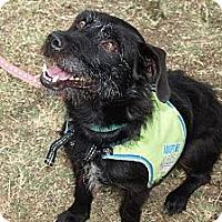 Adopt A Pet :: Alexis - Mission Viejo, CA
