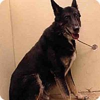 Adopt A Pet :: OLIVER - Tully, NY