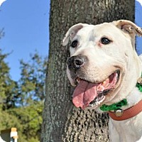 Adopt A Pet :: Shiner - Ocoee, FL
