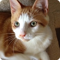Adopt A Pet :: Pete - Newtown Square, PA