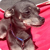 Adopt A Pet :: Trixie - Elkhart, IN