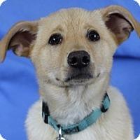 Adopt A Pet :: Banks - Minneapolis, MN