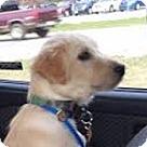 Adopt A Pet :: Norwin