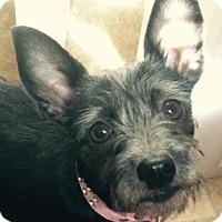 Adopt A Pet :: Dixie - Trenton, NJ
