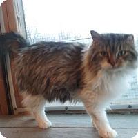 Adopt A Pet :: Moses - Delmont, PA