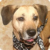 Adopt A Pet :: Jeff - Cincinnati, OH
