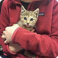 Adopt A Pet :: Dandelion - Island Park, NY
