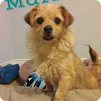 Adopt A Pet :: Marlie - Houston, TX