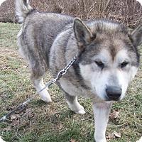 Adopt A Pet :: Axel - Augusta County, VA