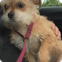 Adopt A Pet :: Mr. Magoo - West Allis, WI