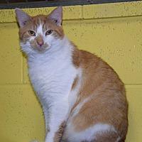 Adopt A Pet :: Atwell - Pottsville, PA