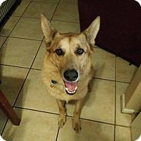 Adopt A Pet :: Rylee - Phoenix, AZ