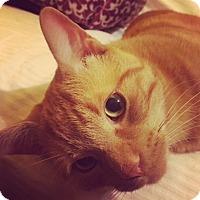 Adopt A Pet :: Todd - Toronto, ON