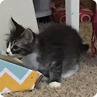 Adopt A Pet :: Carl - Sacramento, CA
