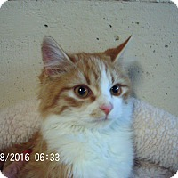 Adopt A Pet :: Frito-COMING SOON! - Bridgeton, MO