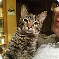 Adopt A Pet :: Tobias - Lyons, IL