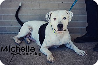 Pit Bull Terrier Mix Dog for adoption in Newport, Kentucky - Michelle