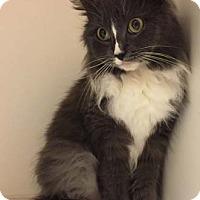 Adopt A Pet :: Poplin - Merrifield, VA