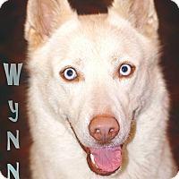 Adopt A Pet :: Wynne - Sugar Land, TX