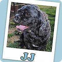 Adopt A Pet :: J J - Pataskala, OH