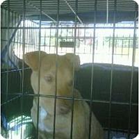 Adopt A Pet :: Rascal - Killen, AL