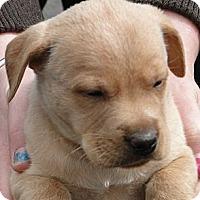 Adopt A Pet :: Beth - Columbus, IN
