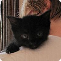 Adopt A Pet :: Ruby - Kirkwood, DE