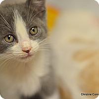 Adopt A Pet :: Sandy, Domino & Dusty - Island Park, NY