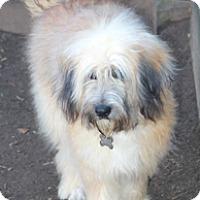 Adopt A Pet :: Huffington-adoption pending - Norwalk, CT
