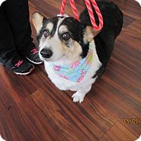 Adopt A Pet :: Maya - Lomita, CA