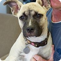 Adopt A Pet :: Hannah Bell - Marietta, GA