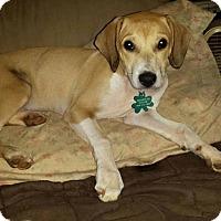 Adopt A Pet :: Sullivan - Alpharetta, GA