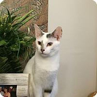 Adopt A Pet :: Otis - Berkeley Hts, NJ