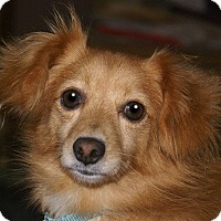 Adopt A Pet :: Gaven - Hagerstown, MD