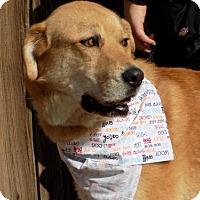 Adopt A Pet :: Sheldon - Apple Valley, CA